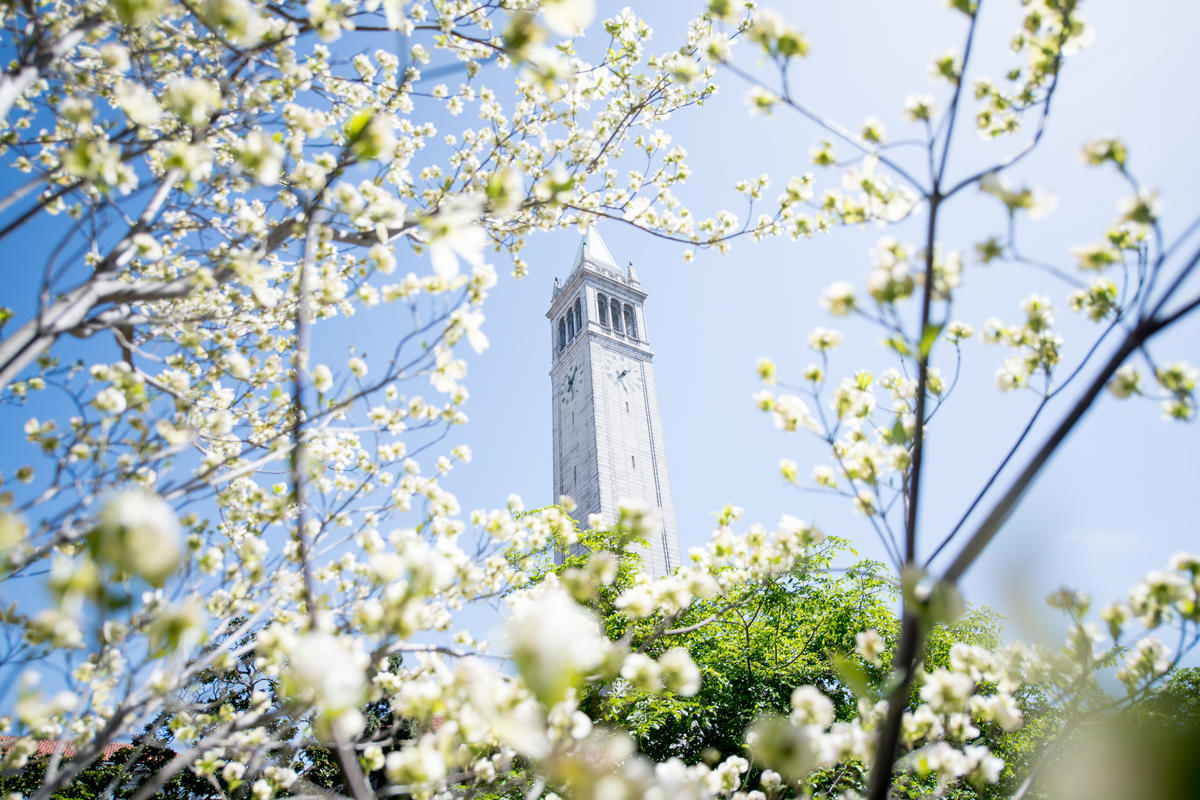 looking up at campanile through white flowers